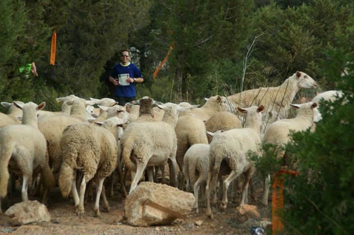 ovejas carrera ibiza