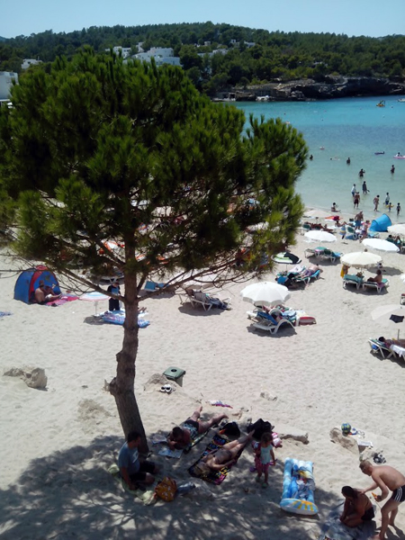 Una sombrilla natural en la playa de s'Arenal Gros. A pesar de ser un núcleo turístico, la playa conserva su encanto.