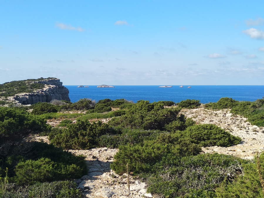 islas de ses bledes en Ibiza